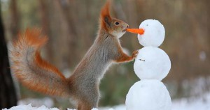 snow_squirrell